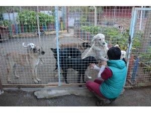 Köpeklerin bayıltılarak ormanlık alana atılması ile ilgili başsavcılıktan açıklama