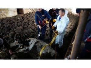 Kuyuya düşen inek kurtarıldı