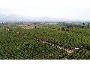 Manisa 2018 yılında 500 bin tondan fazla tarım ürünü ihraç etti
