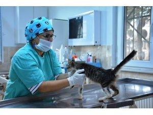 Süleymanpaşa 2018 yılında da sokak hayvanlarını yalnız bırakmadı