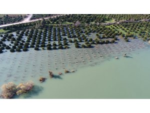 Seyhan Nehri taştı, bahçeler göle döndü