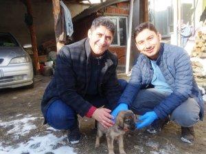 Yaralı köpek yavrusunu muhtar sahiplendi