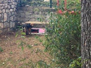 Minik öğrenciler sokak hayvanları için kulübe yaptılar