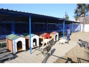 Nazilli hayvan barınağı yenilendi