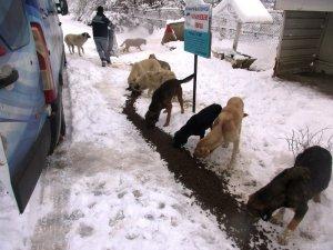 Kütahya'da sokak hayvanlarına yiyecek dağıtıldı