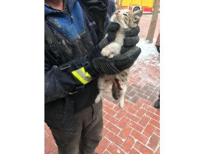 Otomobilin motor kayışı arasına sıkışan kediyi itfaiye kurtardı