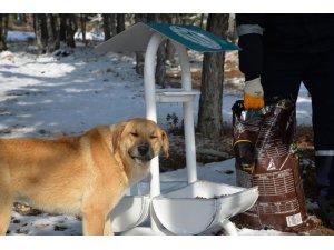Sokak hayvanları soğukta en fazla 17 saat aç kalabiliyor