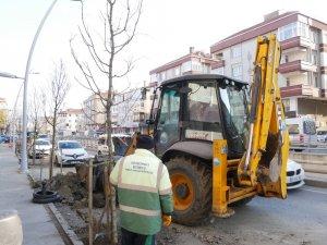 Büyükçekmece'de ağaçlandırma çalışmalarına hız verildi