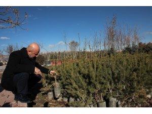 Kayseri'nin yeşil örtüsü Kocasinan'da filizleniyor