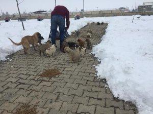 Muş Belediyesi, zorlu kış şartlarında sokak hayvanlarını sahipsiz bırakmıyor