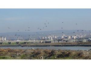 Göçmen kuşların kış durağı Kantar Köprüsü