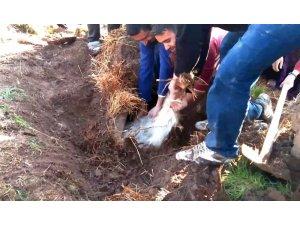 Şanlıurfa'da ahır çöktü, 8 hayvan telef oldu