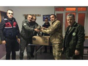 Kaçak avcılar vurdu, jandarma kurtardı