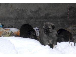 Sibirya soğuklarından etkilenen köpeği ve yavrularını her gün besliyor