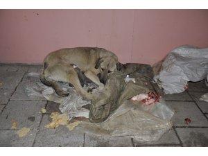 Sokakta doğum yapan köpeğe sahip çıktılar