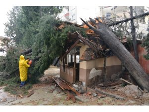 Mersin'de devrilen ağaçlar kaldırılıyor, sular tahliye ediliyor