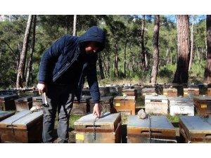 Arıcılar çareyi kovanları zincirlemekte buldu