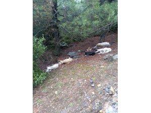 Gaziantep'te zehirlenen 6 köpek telef oldu