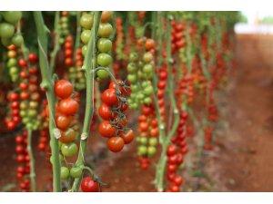 Sera paketi Türkiye Tarımı için büyük fırsat