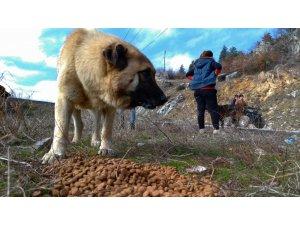 Türk Chopper Motosiklet Grubu üyeleri sokak hayvanları için yem ve mama bıraktı
