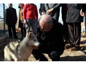 6 bin sokak hayvanının tedavileri yapıldı