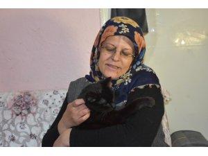 """""""Kedici Kadın"""" 80 kediye annelik yapıyor"""