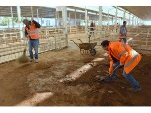 Nazilli canlı hayvan pazarı pırıl pırıl