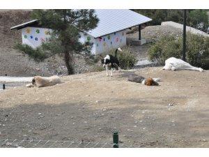 Sevgililer, 14 Şubat öncesi hayvan barınağına koştu
