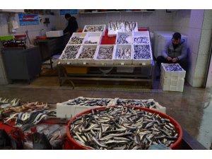 Bu sezon balık haline gelen hamside düşüş, palamutta ise bolluk yaşandı