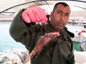 Mersin'de zehirli aslan balığı yakalandı