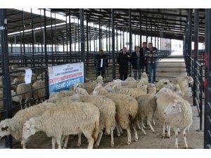 Kütahya'da Genç Çiftçilere 3 yılda 19 Milyon 410 bin TL hibe ödemesi