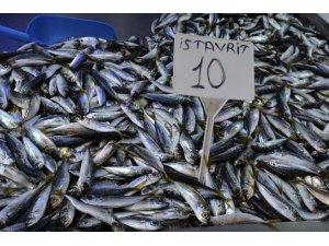 Sinop'ta istavritin kilosu 10 liraya geriledi
