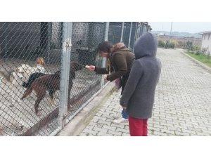 Hayvanları elleri ile beslediler