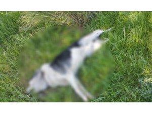 Çeşme'de sahipli iki köpeğin öldürülmesine tepki