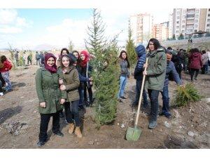 Melikgazi Belediyesinde İlk Etapta 10.000 çam fidanı toprakla buluşacak