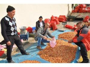 Tohumluk soğan fiyatları yükseliyor