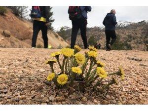 Gümüşhaneli dağcılardan Kelkit'te bahar yürüyüşü