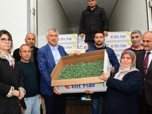 Başkan Karalar'dan köylüye domates fidesi desteği