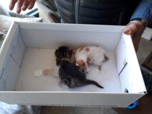 Şömine bacasına sıkışan yavru kedileri itfaiye kurtardı