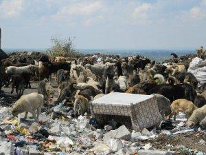 Çöplükteki onlarca hayvanı doyurdular