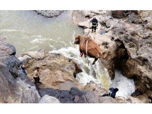 Tarihi köprüden düşen hayvan kurtarıldı