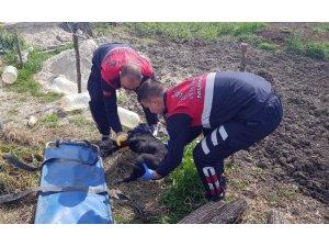 Yaralı halde kapısına gelen köpeği kurtarmak için 45 dakika mücadele etti
