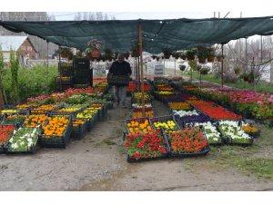 Muş'ta sera çiçekleri satışa sunuldu