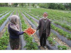 Sason'da yılın ilk çilek hasadı başladı