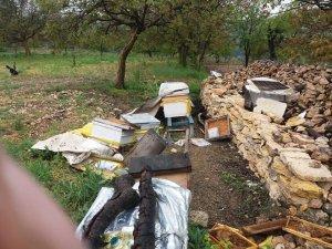 Uludağ'da ayılar  bu köye dadandı...Her gün köye gelip kovanları parçalıyor
