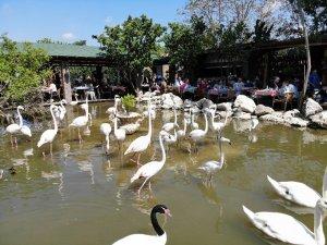 """""""Flamingolu Köy"""" Anneler Günü'nde ziyaretçi akınına uğradı"""