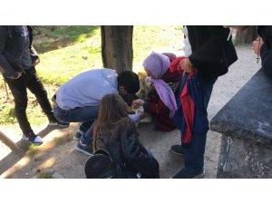 """Edirnekapı Şehitliği'nde """"evcil kedi"""" seferberliği kamerada"""