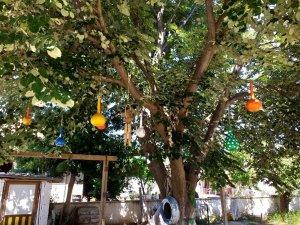 Minikler çalışmalarını ağaç dallarında sergiledi