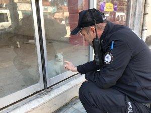 Dükkanda mahsur kalan kedi için kurtarma operasyonu