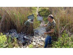 Sazlıkların içi ölü balıklarla doldu